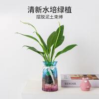 水培新宠鸭脚木水养植物竹芋观音竹室内客厅绿植花卉盆栽四季常青