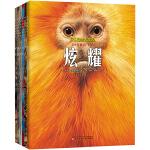 野生动物大发现(套装6册)