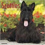 【预订】Just Scotties 2020 Wall Calendar (Dog Breed Calendar) 9