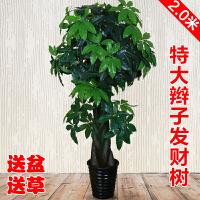 塑料树盆景仿真假树发财树客厅摆设室内装饰大落地盆栽盆景植物塑料假花绿植