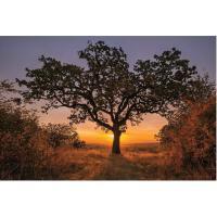 英文原版 智慧树 2020年挂历 世界各地的古老树木摄影 新年日历 Wise Trees 2020 Wall Cale