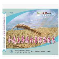 原装正版 小麦主要病虫害防治技术 VCD 1碟片 光盘 视频