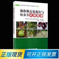 猕猴桃高效栽培与病虫害识别图谱 9787511620477 中国农业科学技术出版社 齐秀娟 等 著