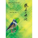 精灵的快闪:闽南金三角常见鸟类概览