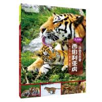 [二手旧书9成新]动物目击者:西伯利亚虎(儿童版),[美] 丽贝卡・E.赫希,曹文浩,9787537695619,河北