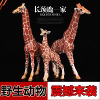 野生动物园世界公母长颈鹿 雌雄麒麟鹿幼崽儿童仿真动物模型玩具