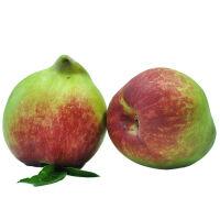 【山东蓬莱馆】云南蒙自鹰嘴蜜桃水蜜桃 现货当季脆桃子 现摘新鲜水果水蜜桃8斤包邮