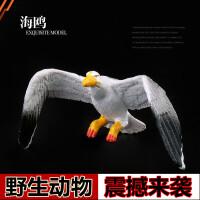 野生动物园 鸟 鹦鹉 海鸥 * 鹰儿童实心仿真动物模型玩具套装