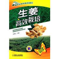 生姜高效栽培(高效种植致富直通车)
