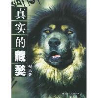 【二手书8成新】真实的藏獒 倪正 国际文化出版公司